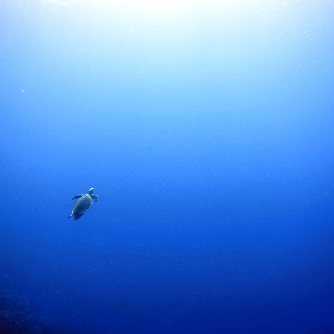 Sea Turtle Awareness Specialty