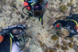 CoralPalooza-3.jpg