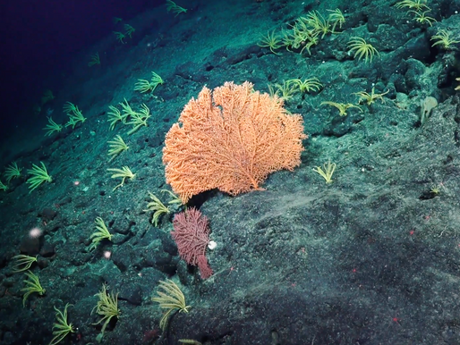 An Unacceptable Solution: Why Deep-Sea Ecosystems Are Not Expendable in the Quest for Clean Energy