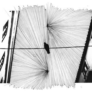 Bird on wire II - MASTER - sRGB - 300dpi - A1 - 594 x 841 .jpg