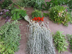 Veranstaltungen, Gartenbau, Gartenpflege, Pflanzen, Gewürz-, Heil- und Duftkräuter, Blumen, Erde, Zierpflanzen, Stauden