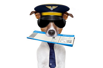 jack russell airline pilot or  flight at