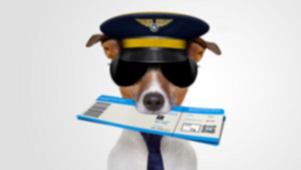 bannery-1300x737px-Flight-Watchdog.jpg