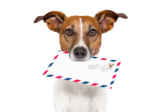 dog with glasses delivering air mail env