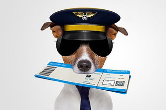 bannery-1300x737px-Flight-Watchdog.jpg