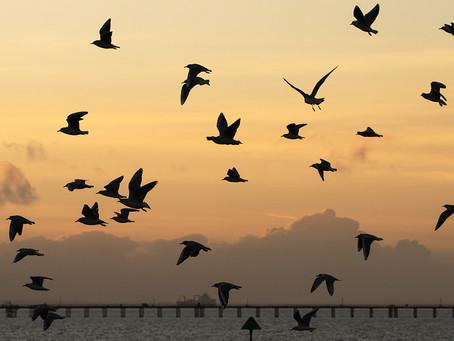 Ballet of the Birds
