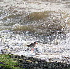into the splash