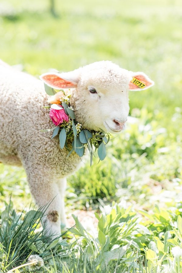 wedding-petting-farm