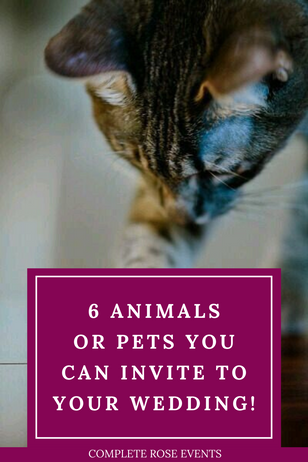 6 animals or pets you can invite to your wedding!
