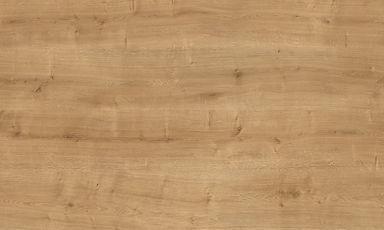 Arlington oak.jpg