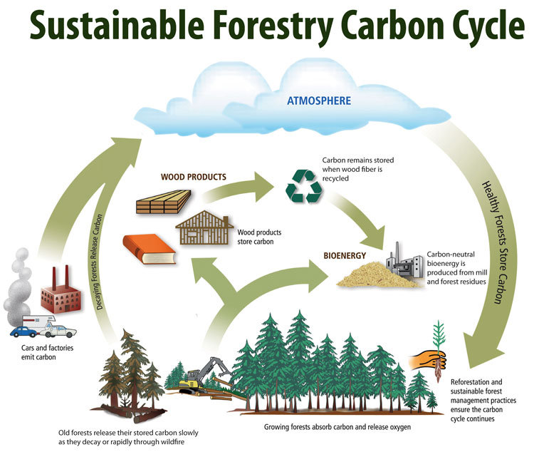 Forest carbon-cycle.jpg