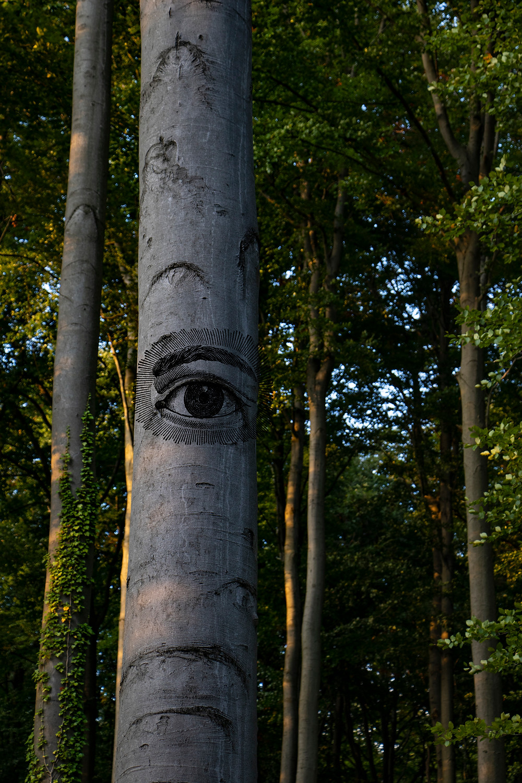 Tree with eye