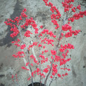Ilex verticillata Winter Gold
