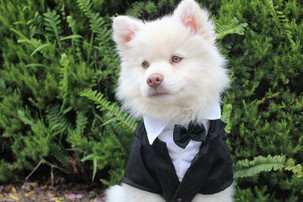 5 Things You Must Know Before Inviting Your Dog to Your Wedding