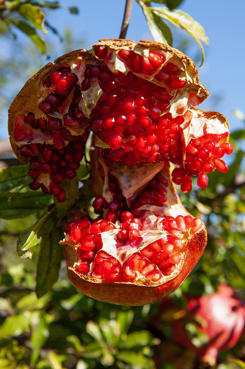 a fruchts.jpg