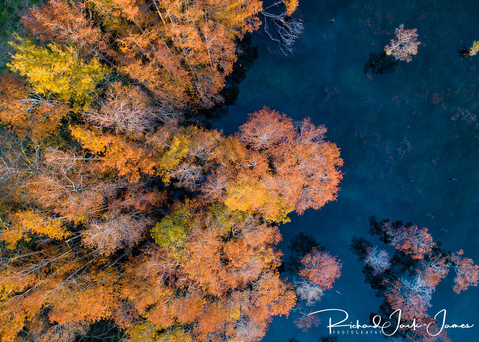 Fall Cypress Trees, Georgia