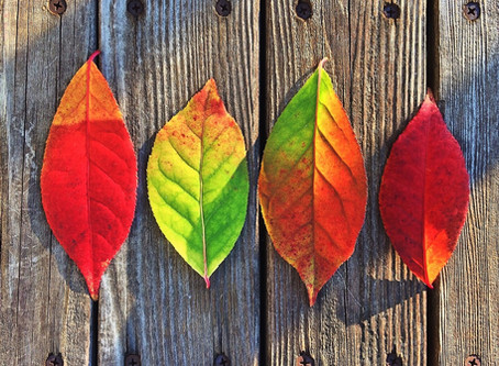Fall Plumbing Checklist for your Home