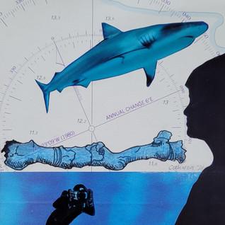 Shark/Nancy Canyon (collage).jpg