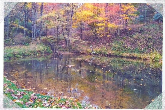 Mr. Pitt's Pond
