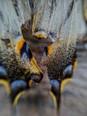 Butterfly wing detail - Detall d'ala de papallona - Detalle de ala de mariposa