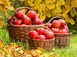 Fall for apples!