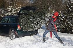 Christmas tree struggle
