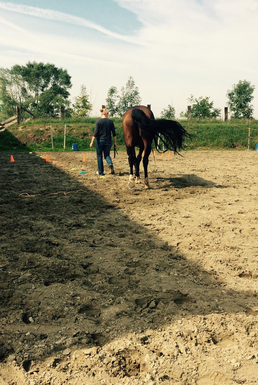 Wat kan mijn paard mij leren?