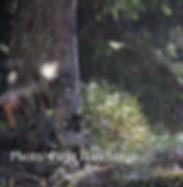 nettisivulle2.jpg