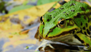Maverick biohacker introduces frog genetic engineering kit