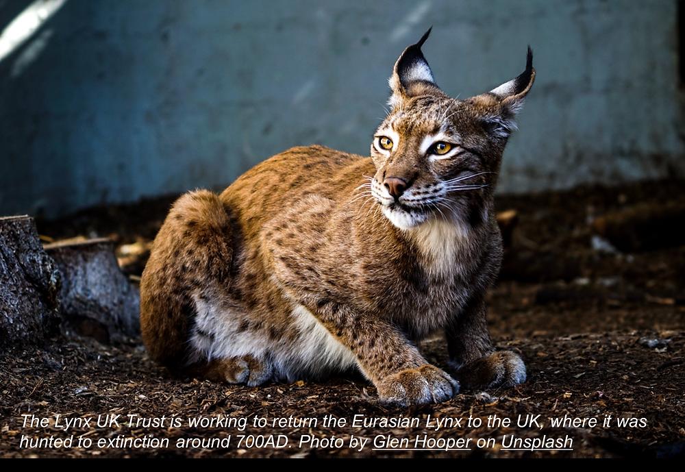 Image of a Eurasian Lynx courtesy of Glen Hooper from Unsplash