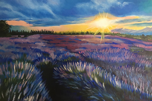 Lavender Field, Sunset