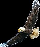 Eagle%20Left_edited.png