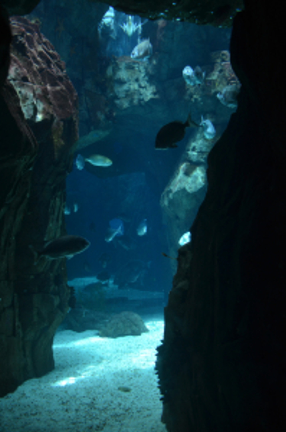 ocean9