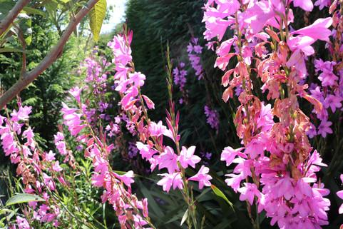 Vibrant gardens