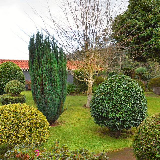 Back Lawn_trees.jpg