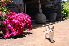 Flower and Feline