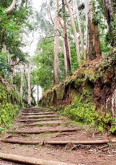 Parque do Santo path