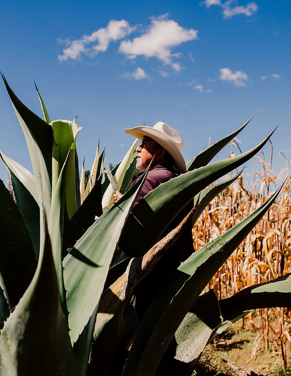 Drink Xoma Maguey Agave Cavity Pulque Pulcatta