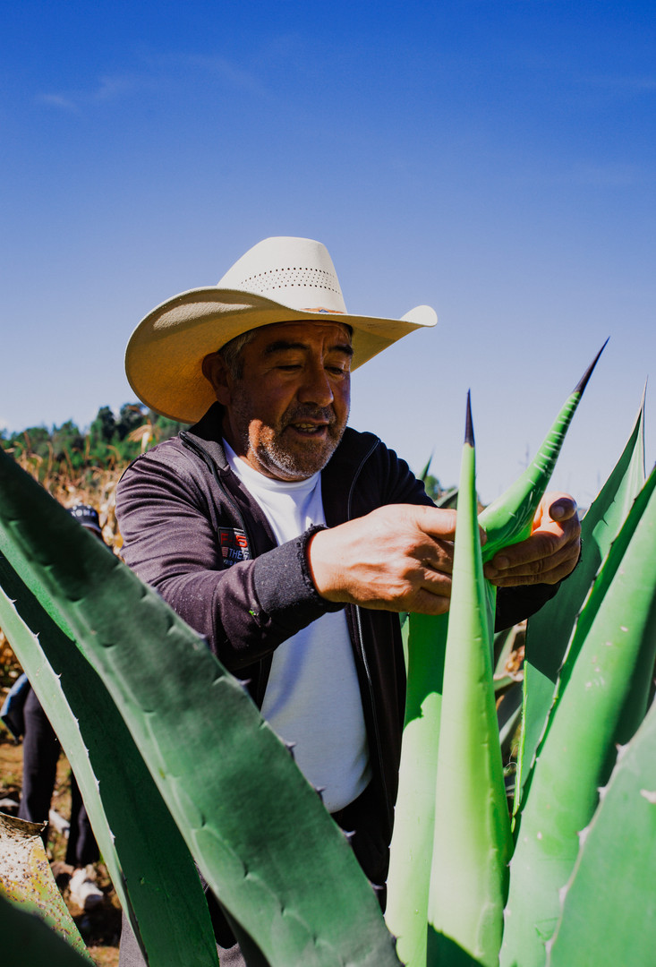 Tlachiquero with Maguey (Agave) Plant
