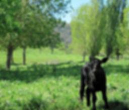 Grassfed Angus Beef