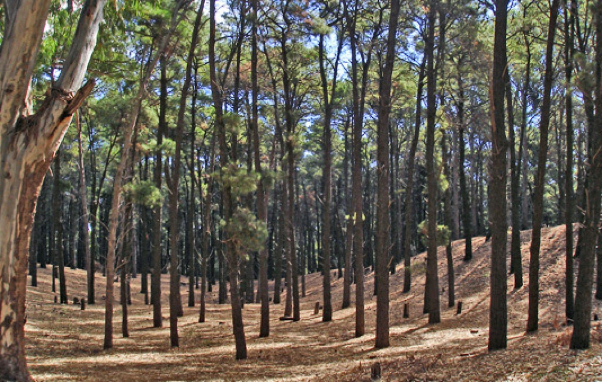 Bosque Encantado en Pehuen Co