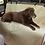 Thumbnail: Protector de auto para mascotas