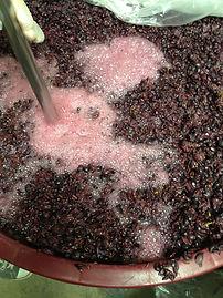 Destemmed Grape Must