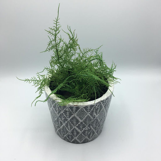 Dutch Pot