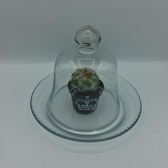 Kew Glass Cloche