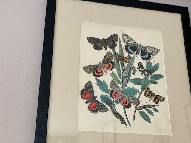 European butterflies & moths collection