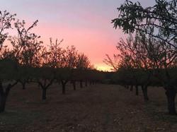 Le coucher de soleil dans les amandi