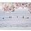 Thumbnail: OCEAN CROWN