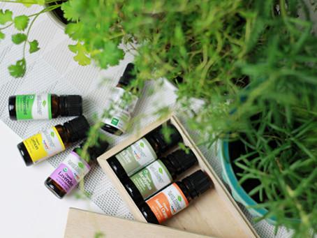 Naturologia e Gastronomia: os benefícios das plantas medicinais na sua vida