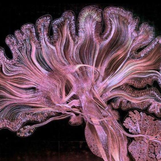 Conversación en torno al Alzheimer